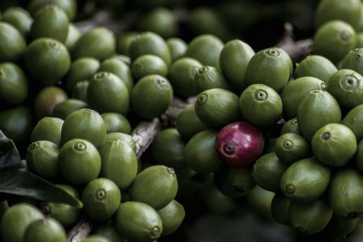 l esperienza del caffè verde