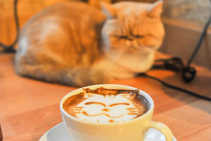cat caffè